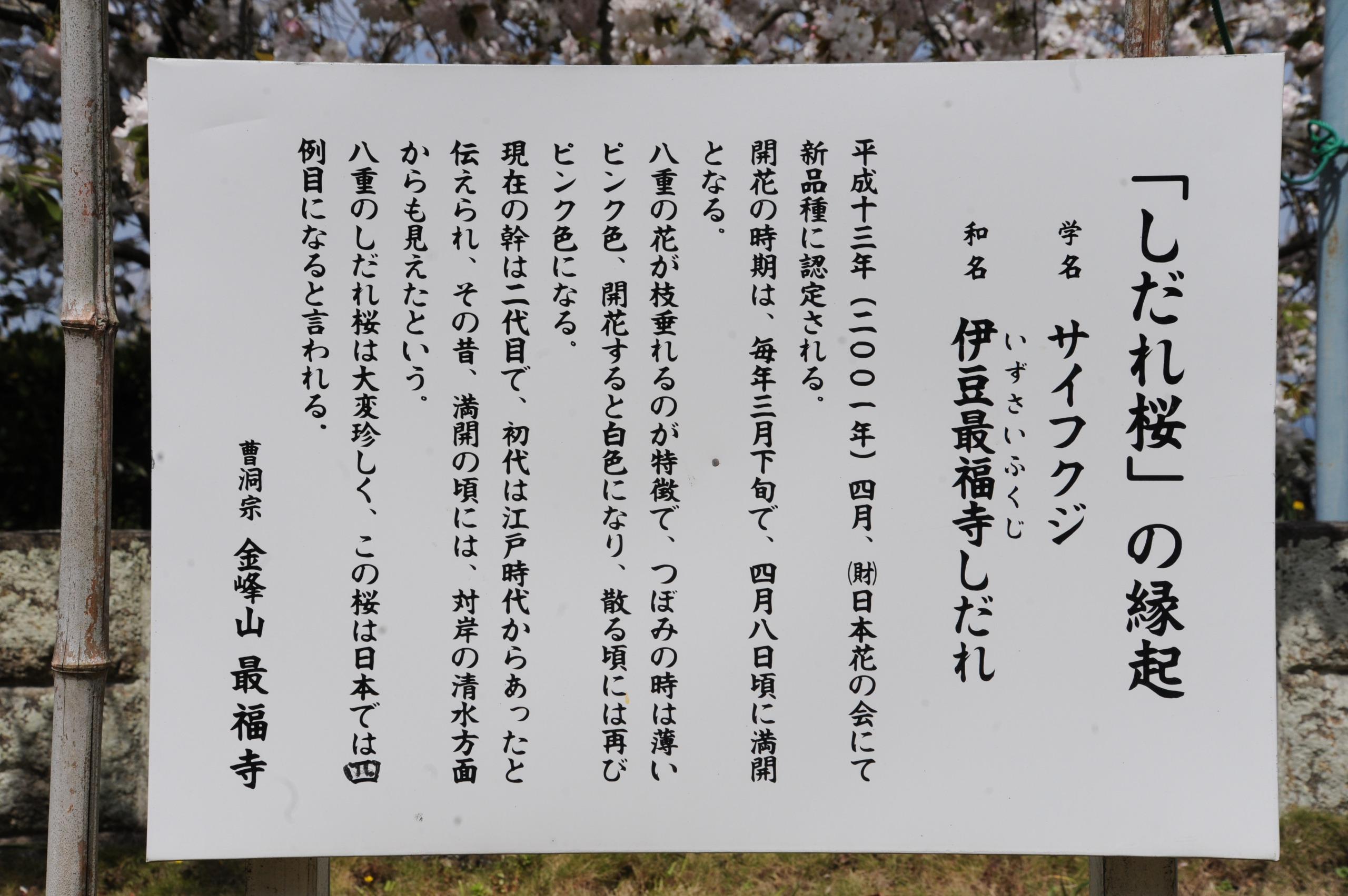 160411最福寺④